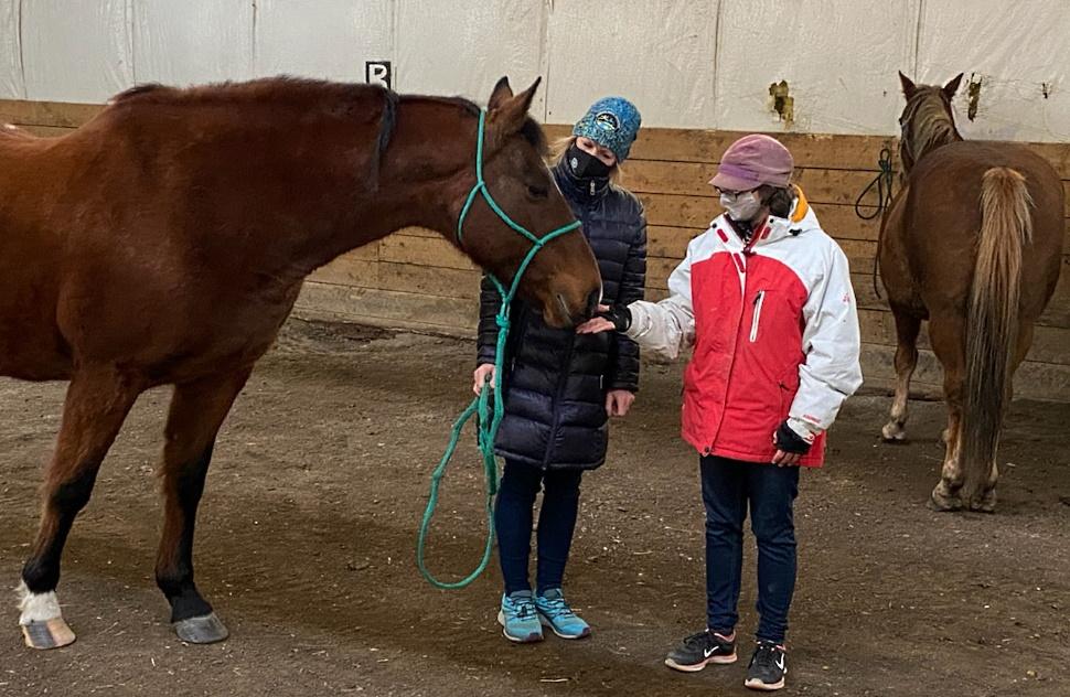horse equine a.jpg